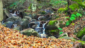 Bergstroom diep in Forest In Autumn stock footage