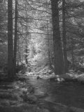 Bergstroom in een hout van net-bomen Royalty-vrije Stock Afbeeldingen