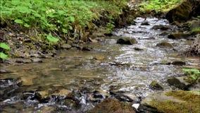 Bergstroom in het bos stock videobeelden