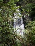 Bergstruiken in scherpe nadruk met Bushkill-Dalingenwaterval op achtergrond Stock Foto's