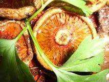 Bergsvampar Klippt, rengjort och lagat mat Royaltyfri Foto