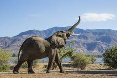 Bergsynkronisering för afrikansk elefant arkivbild