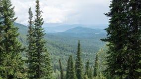 Bergterräng med träd med höjd Arkivbilder