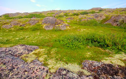 Bergtoendra in Lapland royalty-vrije stock foto