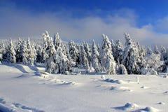 Bergträd i snöklänningarna Arkivfoto