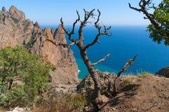 Bergträd och hav Arkivfoton