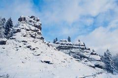 Bergträd som täckas med snö Träden frysas För bakgrund royaltyfria foton