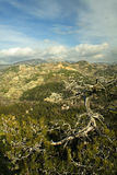bergtroodos Arkivfoto