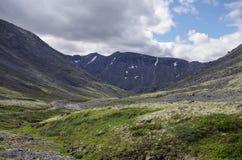 Bergtundran med mossor och vaggar dolt med laver, Hibi Royaltyfria Bilder