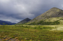 Bergtundran med mossor och vaggar dolt med laver, Hibi Arkivfoto