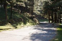 Bergväg bland träd Royaltyfri Fotografi