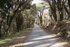 Bergväg bland träd Royaltyfria Bilder
