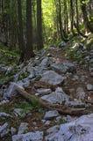 Bergväg I Fotografering för Bildbyråer