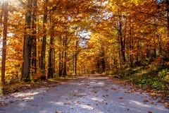 Bergväg i den slovakiska paradisnationalparken, på en klar dag för härlig höst Ändrande säsongbegrepp royaltyfri fotografi