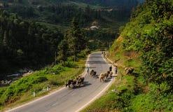 Bergväg i nordliga Vietnam Arkivbilder