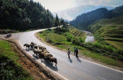 Bergväg i nordliga Vietnam Royaltyfria Bilder