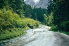Bergväg i skog Arkivbild