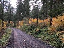 Bergväg i skog i nedgång Arkivfoto