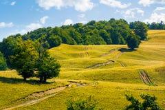 Bergväg som är stigande längs skogen Royaltyfria Bilder