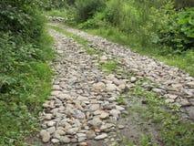 Bergvägen i Carpathiansna royaltyfria bilder