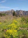 Bergvårlandskap med förgrundsblommor Arkivfoton