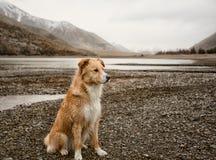 Bergvallei en Hond Stock Foto's