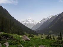 Bergvallei met pijnboombomen wordt behandeld, met een rivier die in voor Royalty-vrije Stock Fotografie