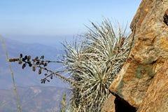 Bergvegetatie met alo? en cactus, flora van het park van La Campana National in centraal Chili, Zuid-Amerika royalty-vrije stock fotografie