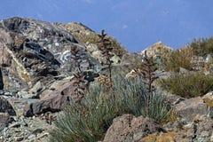 Bergvegetatie met alo? en cactus, flora van het park van La Campana National in centraal Chili, Zuid-Amerika stock afbeeldingen