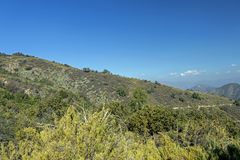 Bergvegetatie met alo? en cactus, flora van het park van La Campana National in centraal Chili, Zuid-Amerika stock fotografie