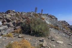 Bergvegetatie met alo? en cactus, flora van het park van La Campana National in centraal Chili, Zuid-Amerika royalty-vrije stock afbeeldingen