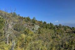 Bergvegetatie met alo? en cactus, flora van het park van La Campana National in centraal Chili, Zuid-Amerika royalty-vrije stock afbeelding