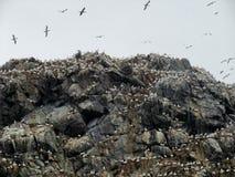 Bergöverkant med fågelfristaden på sju öar Royaltyfri Fotografi