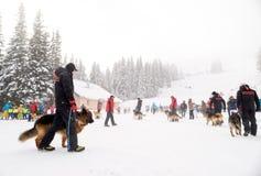 Bergwachtretter mit Rettungshunden Stockfoto