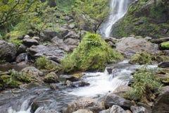 Bergwater en bosvloer Royalty-vrije Stock Afbeeldingen