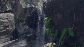 Bergwaterval die op rotsen en groene installaties in regenwoudstroom bij bergrivier het bespatten aan stenen toevloeien stock videobeelden