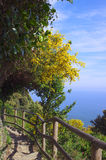 Bergweg in Cinque Terre Stock Afbeelding