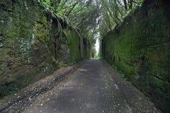 Bergweg in de bossen van Tenerife stock afbeeldingen