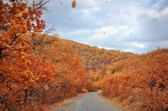 Bergweg in de gouden herfst Stock Foto