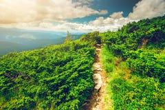 Bergweg in de Karpaten, de Oekraïne stock afbeeldingen