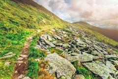 Bergweg in de Karpaten, de Oekraïne royalty-vrije stock foto