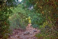 Bergweg in de struiken royalty-vrije stock afbeeldingen