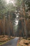 Bergweg door een bos op de herfst Stock Foto's