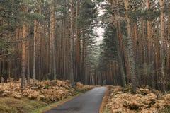 Bergweg door een bos op de herfst Royalty-vrije Stock Afbeeldingen