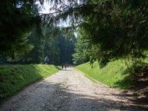 Bergweg in een midden van een bos stock foto