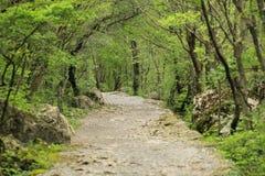 Bergweg in Paklenica Royalty-vrije Stock Foto
