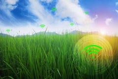 Bergweideachtergrond en heldere hemel in de lente De telefoon en Internet worden wijd uitgespreid Lege ruimte voor tekst De idyll vector illustratie