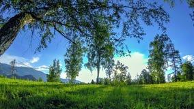 Bergweidetime lapse in de de zomer of de herfsttijd Wilde aard en landelijk gebied De gemotoriseerde schuif dolly beweging stock footage