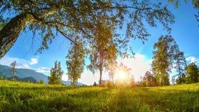Bergweidetime lapse in de de zomer of de herfsttijd Wilde aard en landelijk gebied De gemotoriseerde schuif dolly beweging stock video