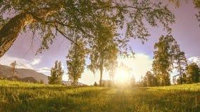 Bergweidetime lapse in de de zomer of de herfsttijd Wilde aard en landelijk gebied De gemotoriseerde schuif dolly beweging stock videobeelden